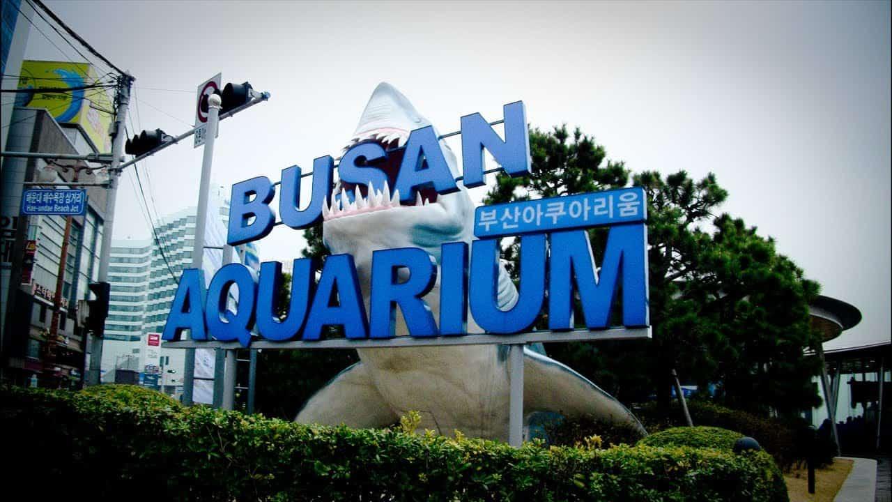 Du-lịch-Busan-Viện-hải-dương