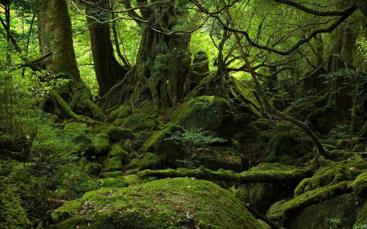 Cảnh đẹp ở Nhật Bản - Yakushima