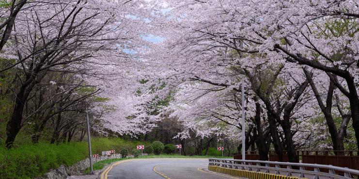 Du-lich-Busan-Damalji