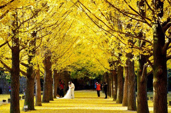 Du-lịch-Hàn-Quốc-mùa-thu-đảo Nami