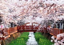 5-lý-do-du-lịch-Hàn-Quốc-vào-mùa-xuân