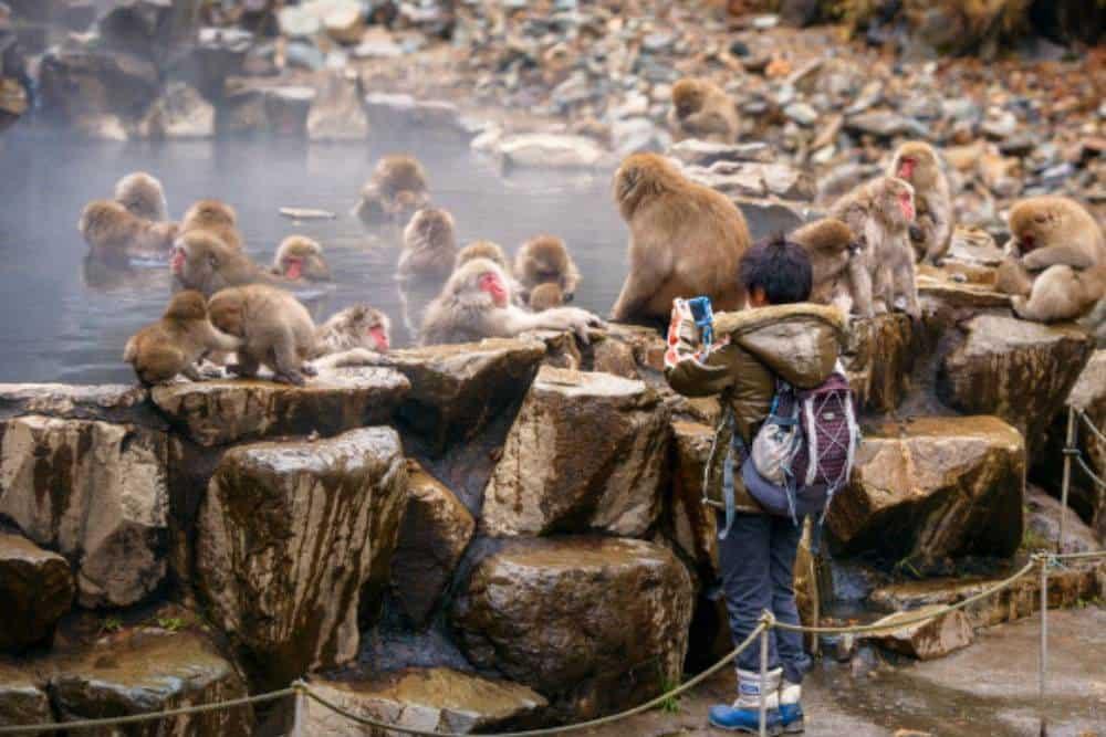 Du-lich-Nhat-Ban-Công viên khỉ Jigokudani