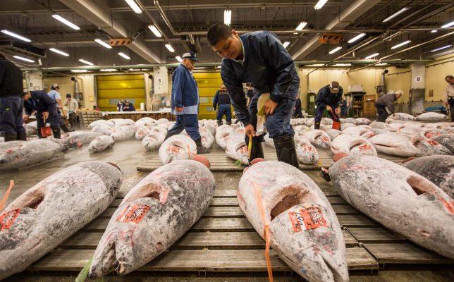 Du-lich-tokyo-cho-ca-Tsukiji