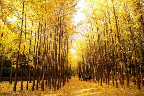 seoul-rừng-Hàn-Quốc-mùa-thu