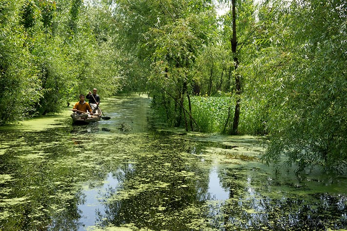du-lịch-ấn-độ-Dal-Lake-Srinagar-Kashmir-India