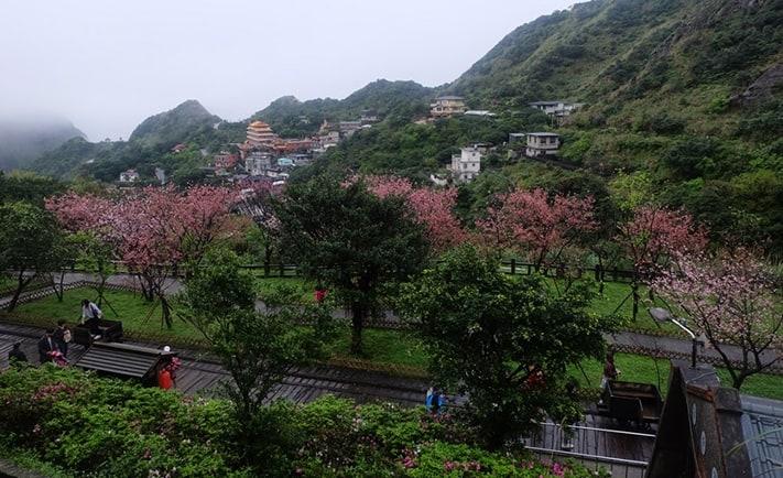 kinh-nghiệm-đi-Đài-Loan-Jinguashi-Sakura-711