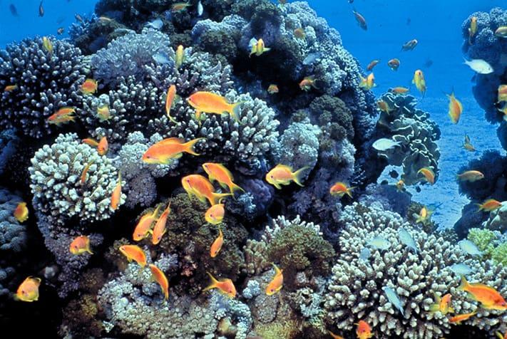 du-lịch-israel-eliat-Gulf-of-Eilat-(Red-Sea)-coral-reefs-711