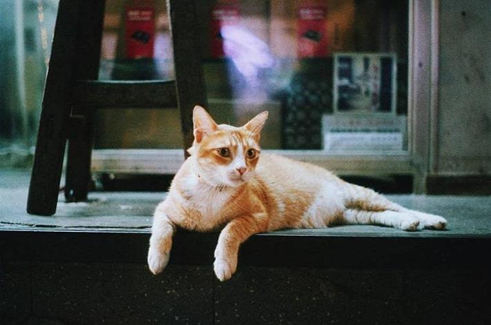 xin-visa-hongkong-kinh-nghiem-du-lich-hongkong-cat711