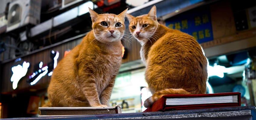thumb-xin-visa-hongkong-kinh-nghiem-du-lich-hongkong-cat