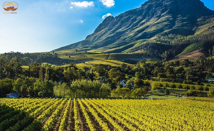 Du lich Stellenbosch