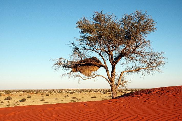 du-lịch-nam-phi-Kalahari-birdnest-711