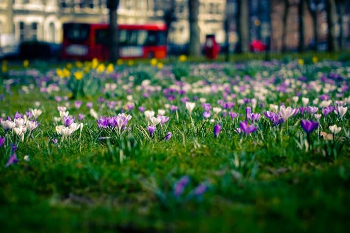 du-lịch-anh-quốc-london-spring-711