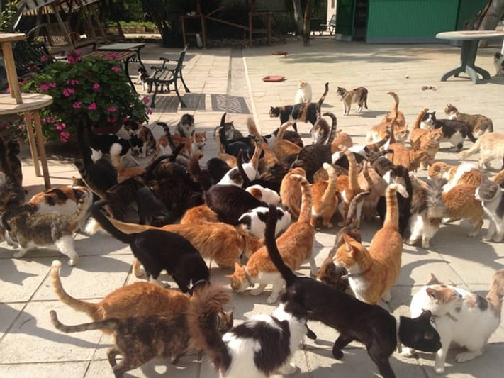 du-lịch-síp-The-Malcolm-Cat-Sanctuary-711
