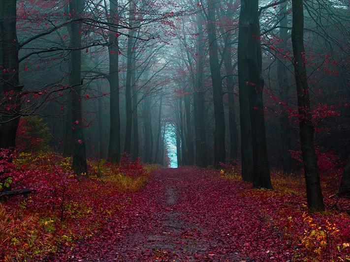 du-lịch-nước-đức-black-forest-germany-711