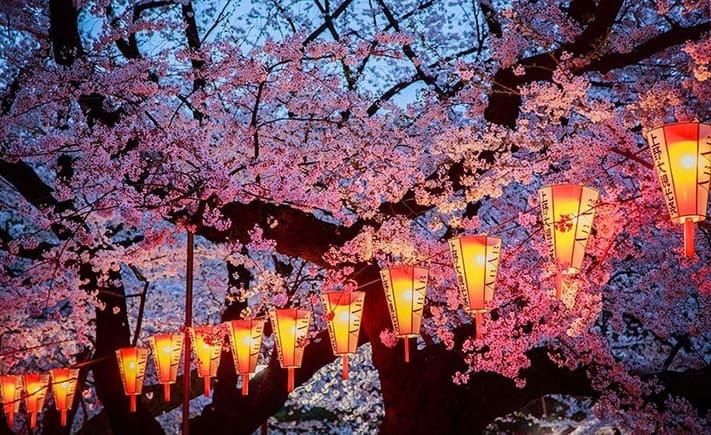 visa-nhật-bản-sakura-festival-711