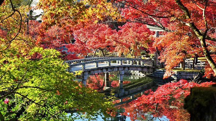 Xin visa Nhật Bản đi ngắm mùa lá đỏ cực đẹp