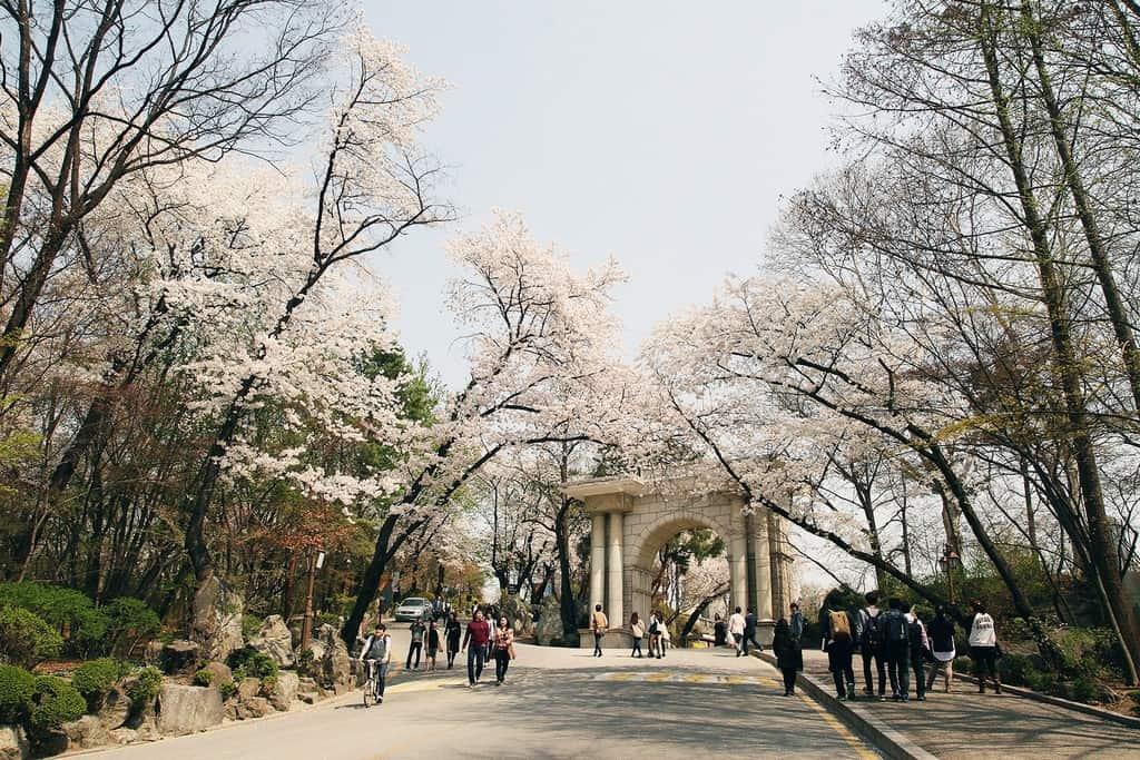 du-lich-han-quoc-thang-3-kyunghee