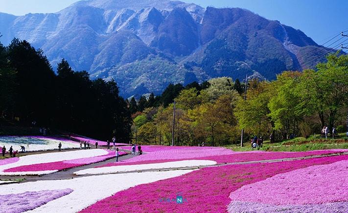 Hitsujiyama du lịch nhật bản