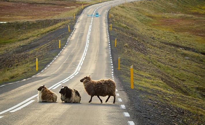 Du lich Iceland