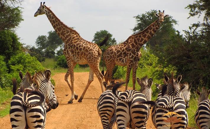 Du lich Tanzania