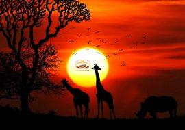 Safari chau Phi